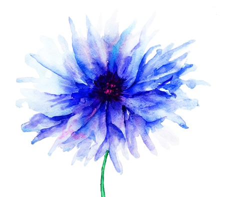 Blue Colored Cornflowers, watercolor illustration Stock Photo