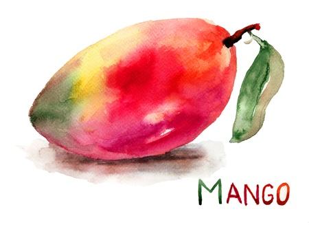 mango fruta: Fruta del mango, ilustraci�n acuarela