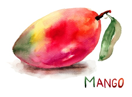 mango leaf: Mango fruit, watercolor illustration Stock Photo