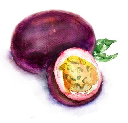 passion fruit: Passion fruit, watercolor illustration Stock Photo