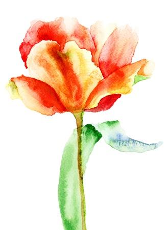 Yellow Tulip flower, watercolor illustration