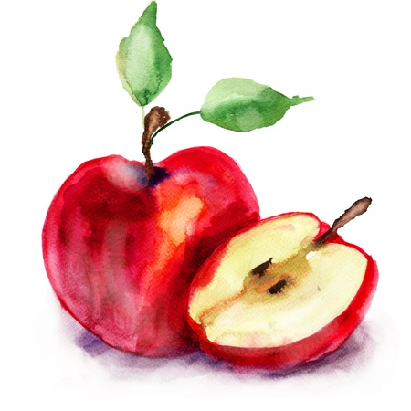 Stylized watercolor apple illustration  Stock Photo