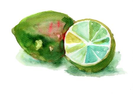 Watercolor illustration of Limes illustration