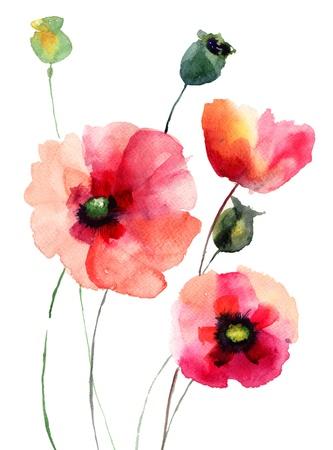 amapola: Flores de amapola, ilustración acuarela