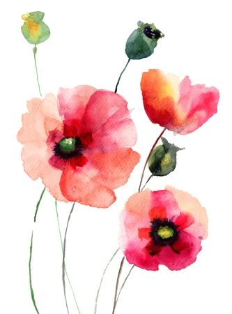 Poppy flowers, watercolor illustration