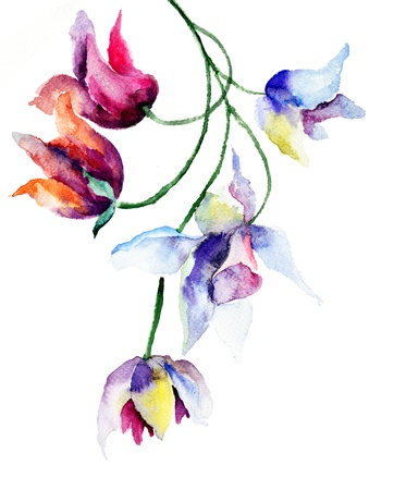 watercolor flower: Spring flowers, watercolor illustration