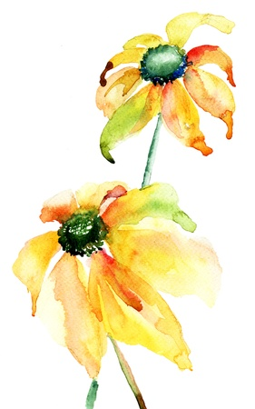Summer yellow flowers, watercolor illustration
