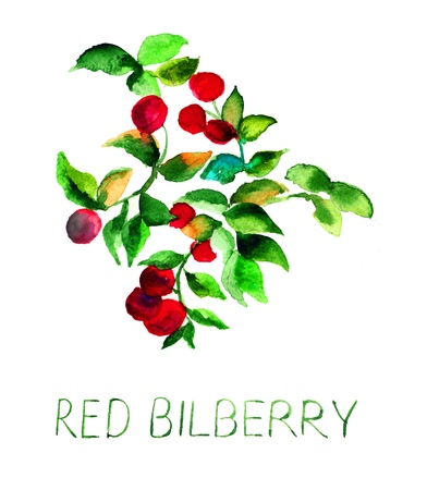 foxberry: Red bilberry, watercolor illustration Stock Photo