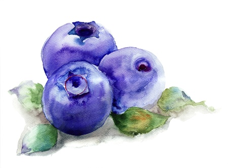 fruit illustration: Blueberries with leaves, watercolor illustration