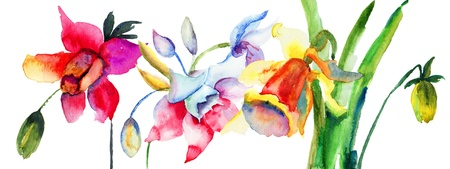 Beautiful Summer flowers, Watercolor painting Stock Photo - 19063949