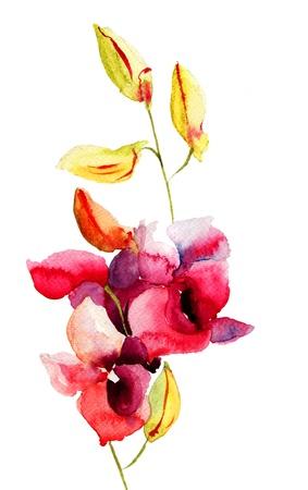 Orchidées roses fleurs, illustration aquarelle