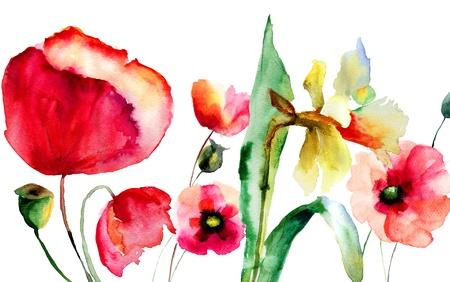 amapola: Ilustraci�n de la acuarela de las flores de verano