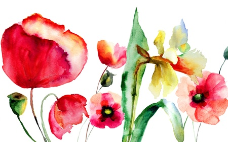 poppy flower: Watercolor illustration of Summer flowers