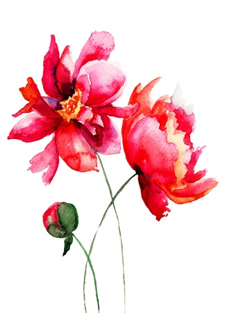 botanical drawing: Beautiful Peony flower