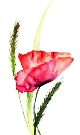 Stylized Poppy flowers watercolor illustration  illustration