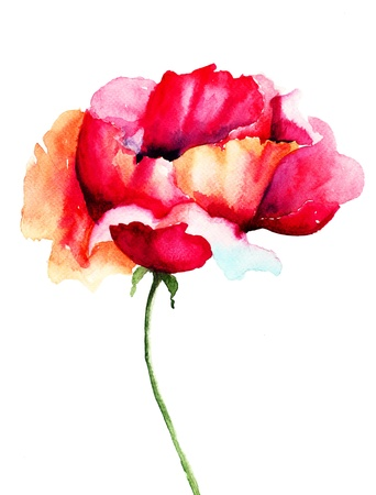 Poppy flower, watercolor illustration