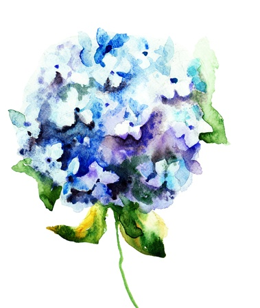 Beautiful Hydrangea blue flowers, watercolor illustration  Stock Photo