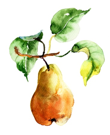 Watercolor illustration of pear  illustration