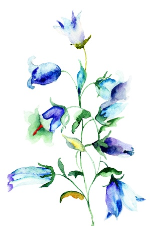 Bell flower, watercolor illustration