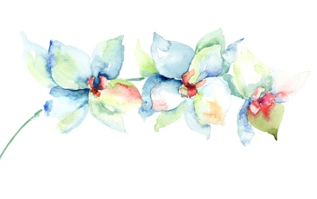 watercolor flower: Orchids flowers, watercolor illustration