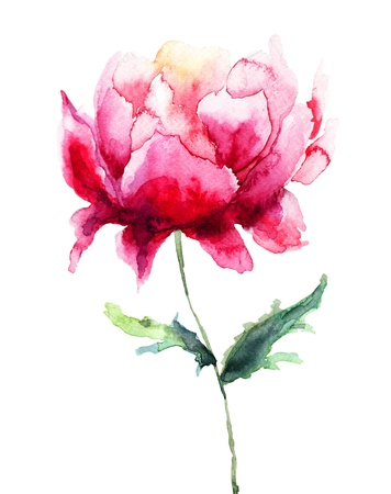 watercolor flower: Beautiful Peony flower, Watercolor painting