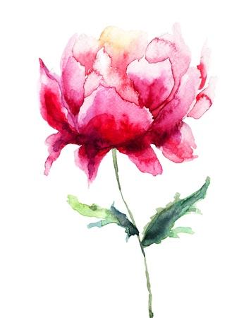 Mooie Peony bloem, schilderen van de waterverf