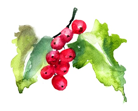 red currants: Red Currant, watercolor illustration