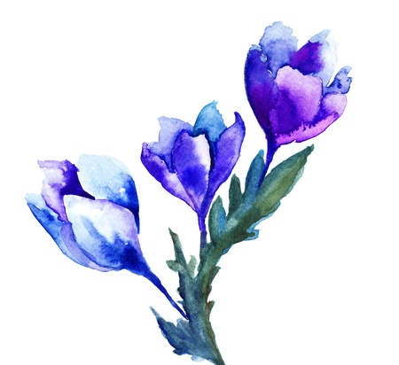 Spring flowers watercolor illustration illustration