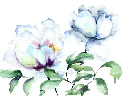Beautiful Peonies flowers, Watercolor painting