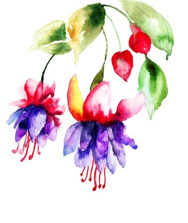 campanula: Campanula, watercolor illustration