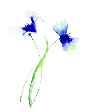 paintings: Blue Colored Cornflowers, watercolor illustration Stock Photo
