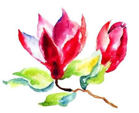 paintings: Magnolia, watercolor illustration