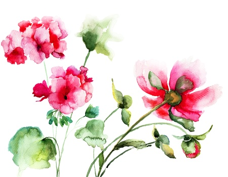 Geranium and Peony flowers, watercolor illustration