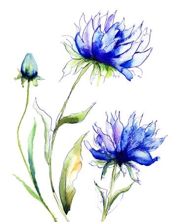 Cornflower: Blue Colored Cornflowers, watercolor illustration