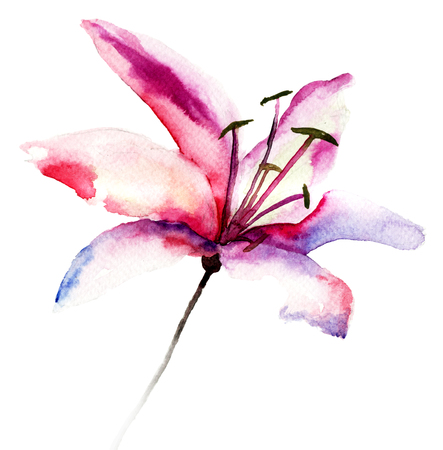 Beautiful Lily flowers, watercolor illustration  illustration