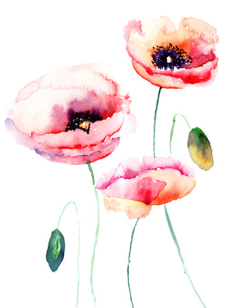 poppy flowers: Colorful pink flower, watercolor illustration