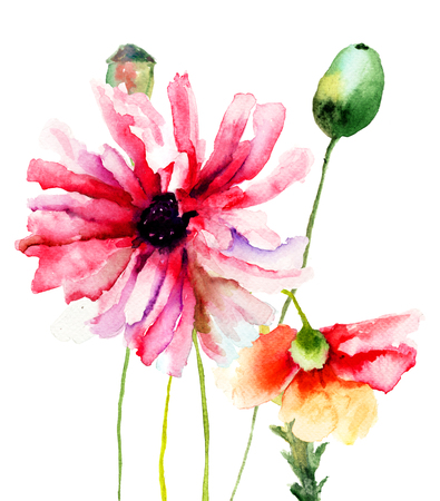 Colorful summer illustration of Poppy flowers, watercolor painting illustration