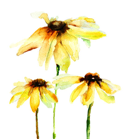 Summer yellow flowers, watercolor illustration illustration