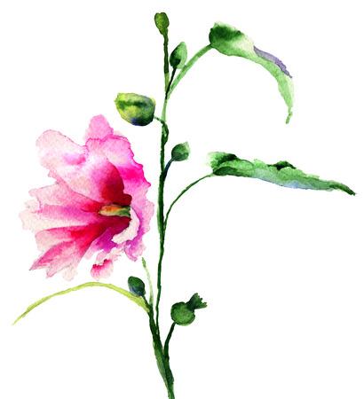 convolvulus: Ipomea flowers illustration, watercolor painting  Stock Photo
