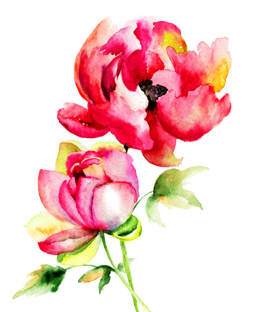 Original watercolor illustration with Peony flowers  illustration