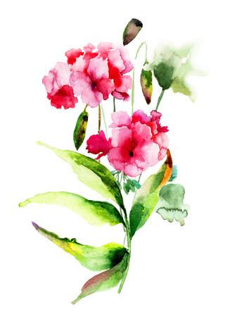 geranium: Geranium and Poppy flowers, watercolor illustration