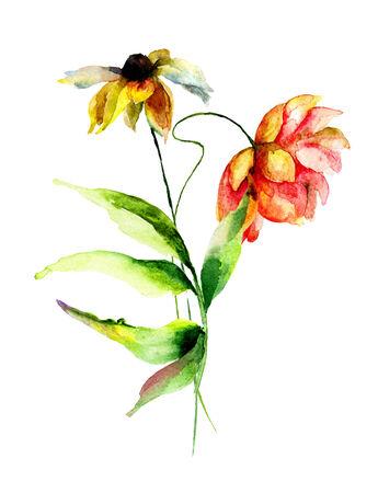 gerber: Gerber flowers, watercolor illustration