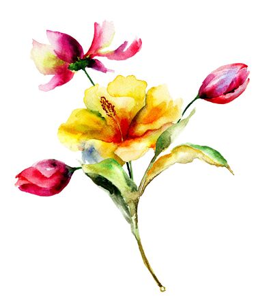 lily flowers: Tulip and Lily flowers, watercolor illustration