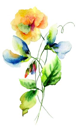 sweet pea: Original watercolor illustration with Sweet pea and Poppy flowers Stock Photo