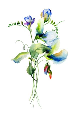 甘いエンドウ豆花、水彩イラスト