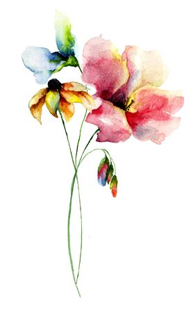 sweet pea: Original Summer flowers, watercolor illustration Stock Photo