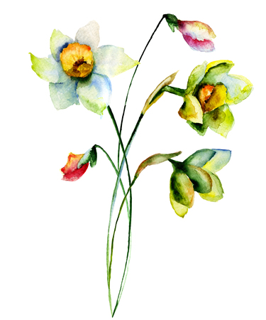yellow wildflowers: Watercolor illustration of Narcissus flowers Stock Photo
