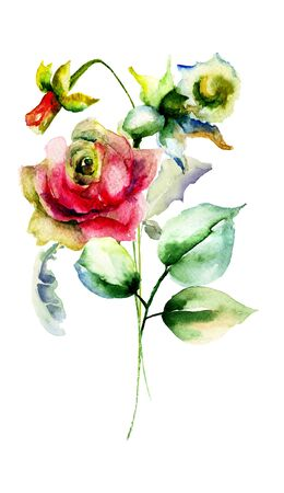 narcissus: Narcissus and Roses flowers, watercolor illustration Stock Photo