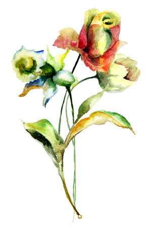 narcissus: Rose, Tulip and Narcissus flowers, watercolor illustration