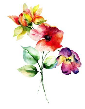 gerbera: Poppy, Gerbera and Tulips flowers, watercolor illustration